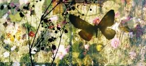 butterflies16 panorama kleinweb