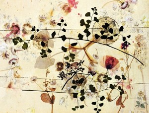 somnambule flowers 07